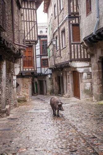 Iberico Pig in La Alberca
